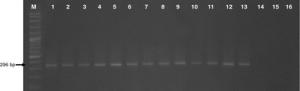 fml2581-fig-0001